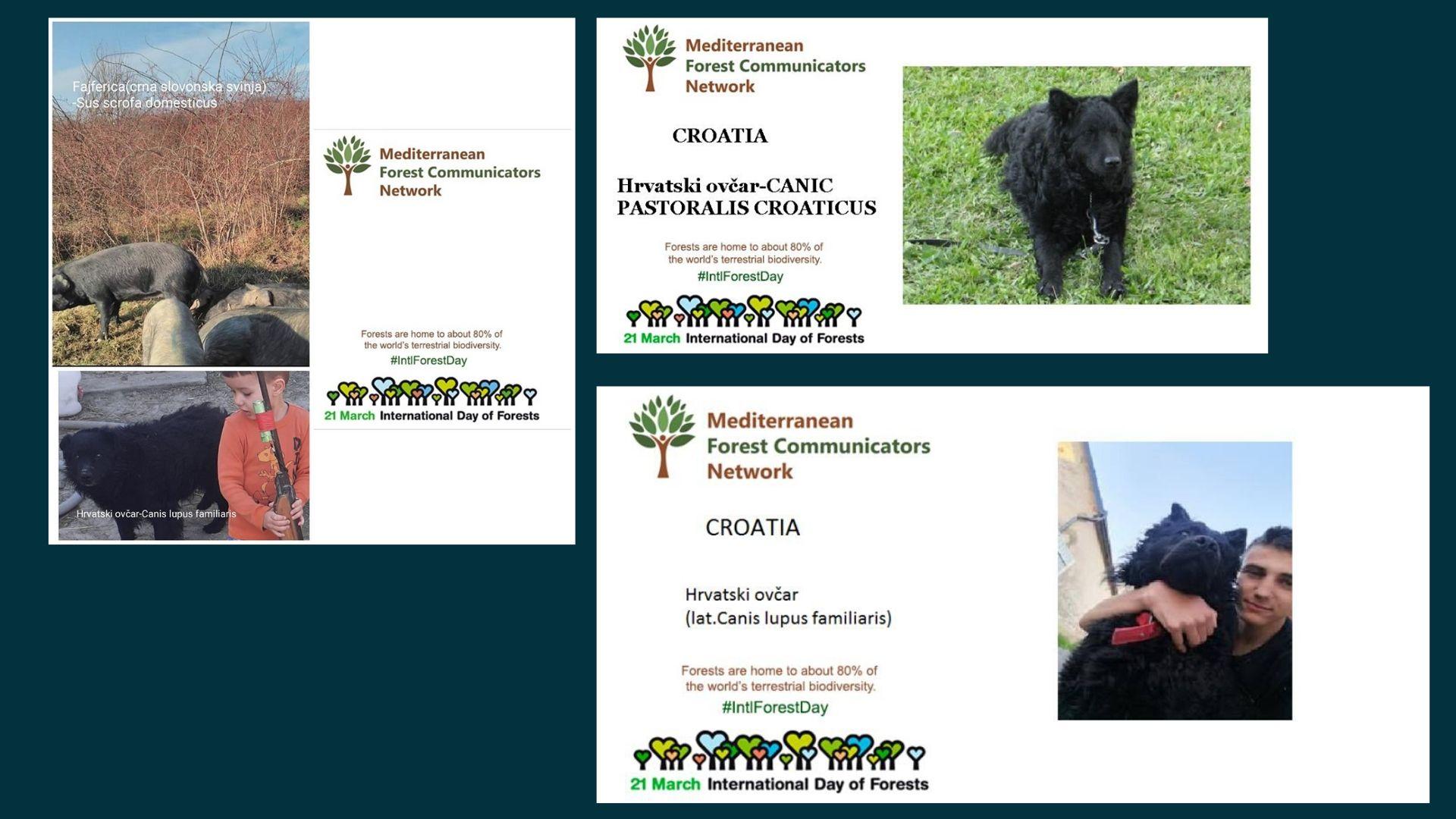 Endemic animals of Croatia
