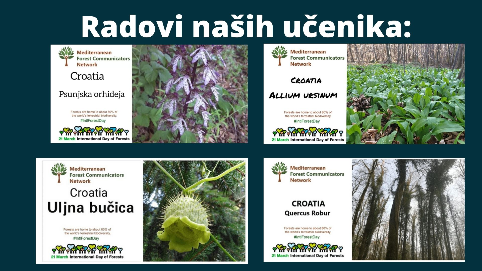 Endemic plants of Croatia