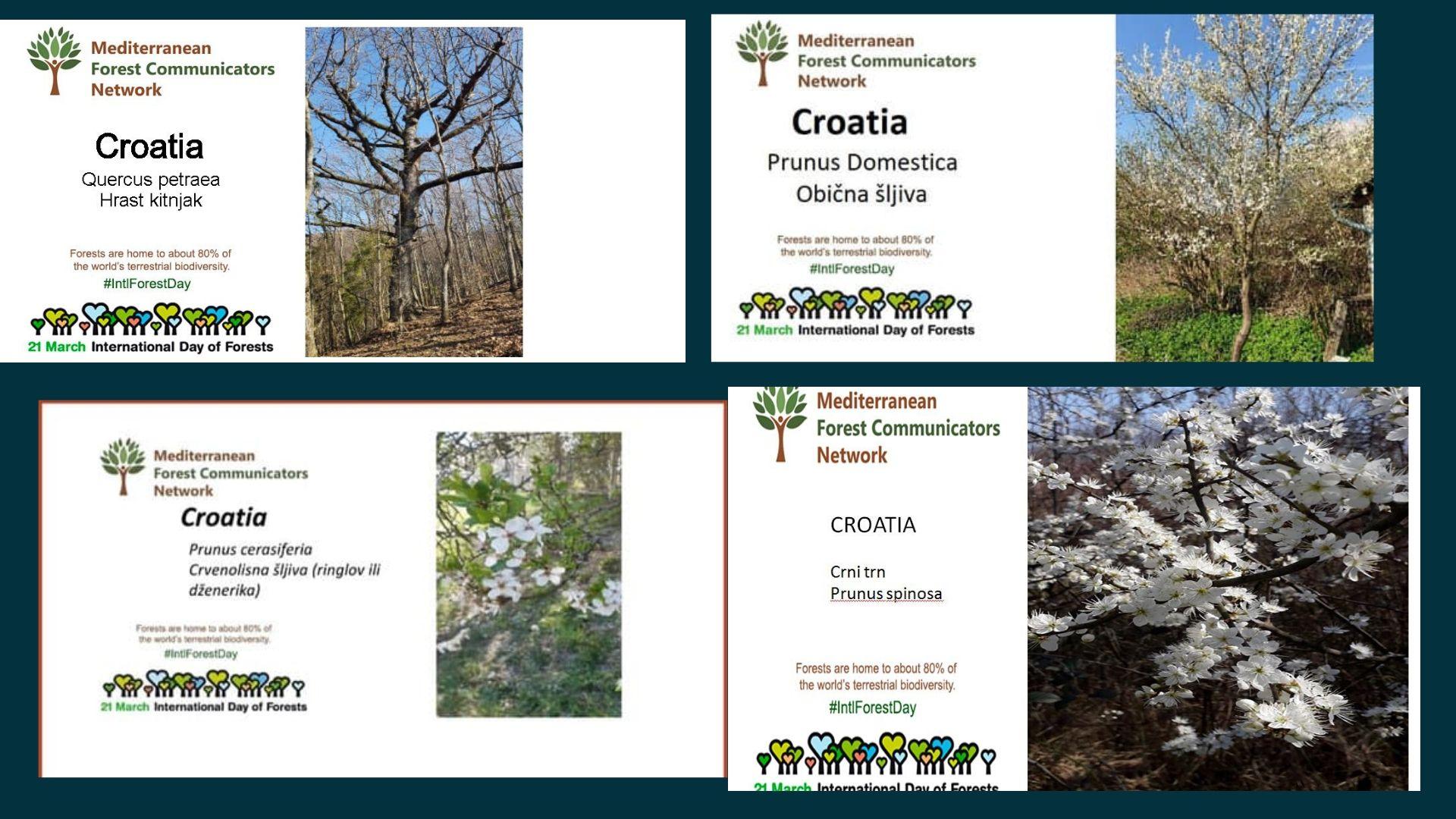 Fruits and trees of Croatia